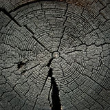 Cut of the old cracked tree Stock Photos