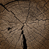 Cut of the old cracked tree Royalty Free Stock Photos