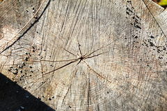 Cut old dead tree trunk  wood Stock Photo