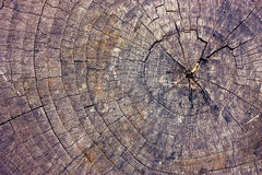 Cut of old dry tree Stock Image