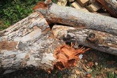 Cut old large timber Stock Photos