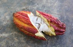 A cut opened cocoa pod Royalty Free Stock Photos