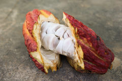 A cut opened cocoa pod Royalty Free Stock Photography
