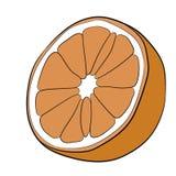 Cut orange fruit halves isolated on white of  illustrations Royalty Free Stock Images
