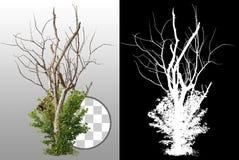 Cut out dead tree