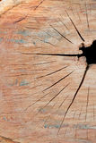 Cut out log  texture Stock Photography