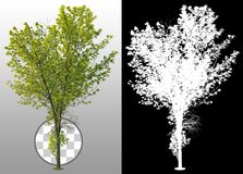 Cut out tree. Green shrub isolated