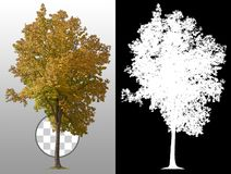 Free Cut Out Tree. Shrub In Autumn Stock Image - 160142851