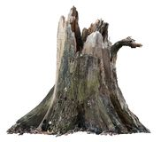 Cut out tree stump. Broken tree