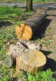 Cut out tree trunk in the woods Stock Images