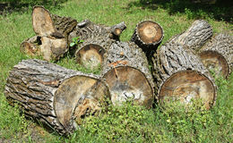 Cut out tree trunks Stock Photography