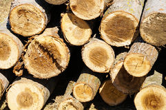 Cut out tree trunks Royalty Free Stock Photo