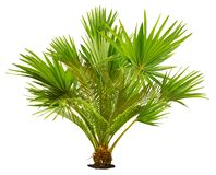 Cut out tropical plant. Exotic plant isolated