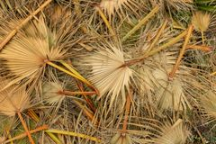 A pile of cut palm fronds. Cut palm fronds heaped in a pile in Cabras, Sardinia, Italy stock photo