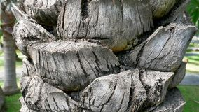 Cut Palm Tree Trunk Texture Royalty Free Stock Photography