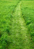Cut path in a green grass lawn Royalty Free Stock Images
