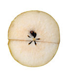 Cut pear slice with seeds Stock Images