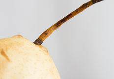 Cut pear Royalty Free Stock Photography
