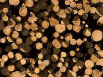 Cut Pine Lumber Royalty Free Stock Image