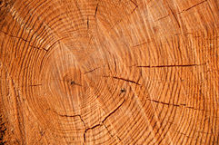 Cut pine texture closeup Royalty Free Stock Photos