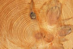 Cut of the pine trunk Stock Photo