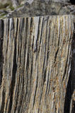 Cut pine trunk along. The pine stem are cut lengthwise and covered by the yellow pitch dried. Pine tree secreted resins on the cut section long ago Royalty Free Stock Photos