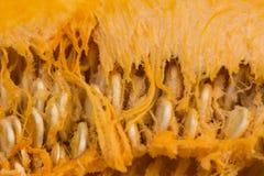 Cut pumpkin closeup Stock Photos