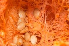 Cut pumpkin Stock Images