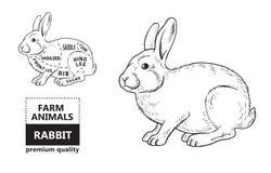 cut rabbit poster butcher diagram groceries meat stores shop farmer market silhouette vector related theme illustration 114110461 butcher diagram rabbit stock illustrations 62 butcher diagram