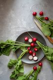 Cut radishes in a dark plate on a dark background royalty free stock photos