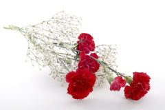 Cut Red Carnations Royalty Free Stock Images