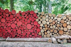Cut red natural logs trees wood stock photos