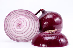 The cut red onion isolated on white background Royalty Free Stock Images