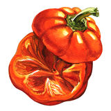 Cut red pepper isolated, top view, watercolor illustration on white. Cut raw red pepper with stem isolated, top view, watercolor illustration on white background royalty free illustration