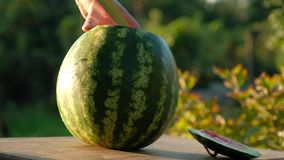 Cut ripe watermelon. Cutting of a ripe big water-melon on the nature stock footage