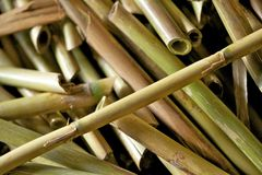 Cut river cane or bamboo Royalty Free Stock Photography