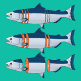 Cut of Salmon Fish Vector. Cut and Split of Salmon Fish Vector Stock Photos