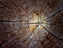 Cut secetion of wood stump Stock Photography