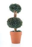 Cut shrub Royalty Free Stock Photo