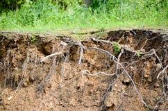 Cut of soil Royalty Free Stock Image