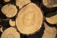Cut spruce logs Royalty Free Stock Photo