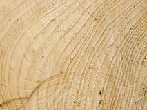 Cut spruce wood texture Royalty Free Stock Image