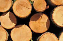 Cut and stacked trees Royalty Free Stock Photo