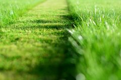 mowing the lawn. A perspective of green grass cut strip. Selective focus royalty free stock photos