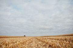 Cut stubble and chaff in a harvested corn field. Viewed at a low angle under a grey clod cover on a moody autumn day Royalty Free Stock Photography