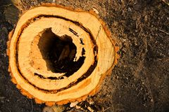 Cut stump. With a hole inside Stock Images