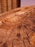 Cut Stump Stock Image