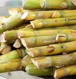 Cut Sugar Cane for Sale Stock Photography