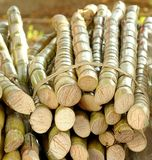 Cut Sugar Cane for Sale Stock Photo
