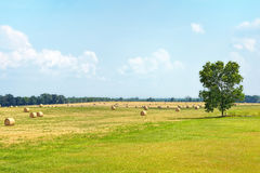 Cut Summer Hay Field Royalty Free Stock Photos